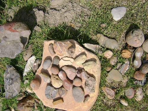 Fossils and stones