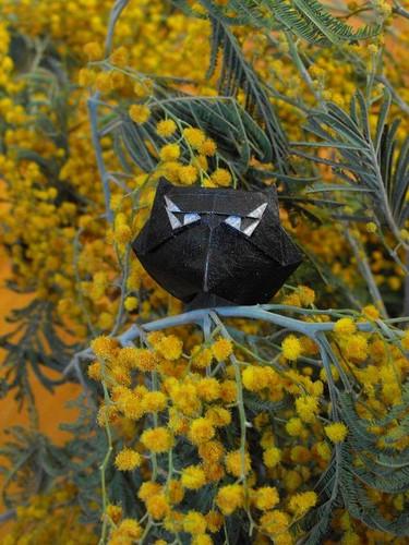Сплюшка, Füleskuvik (Scops owl)
