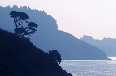 Arthurstown by Hook or by Crooke (Michael Fitzgerald (micfitz)) Tags: blue sea tree nature misty coast lone hook landsape bluetones ballyhack passageeast crooke countywaterfordireland arhturstown