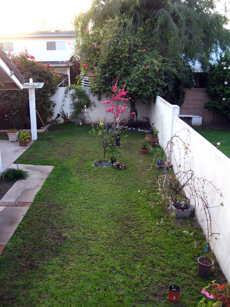 fruit trees and berries in small backyard