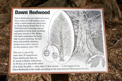 IMG_5926 (alliewilkinson) Tags: park newyork tree uploaded longisland nassaucounty dawnredwood baileyarboretum