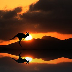 Australian Wildlife Reflection (Heaven`s Gate (John)) Tags: sunset sky lake reflection nature water silhouette wildlife australia kangaroo 100faves 50faves 10faves 25faves johndalkin heavensgatejohn australianwildlifereflection
