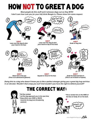 Tips On Dog Training Greeting a Dog