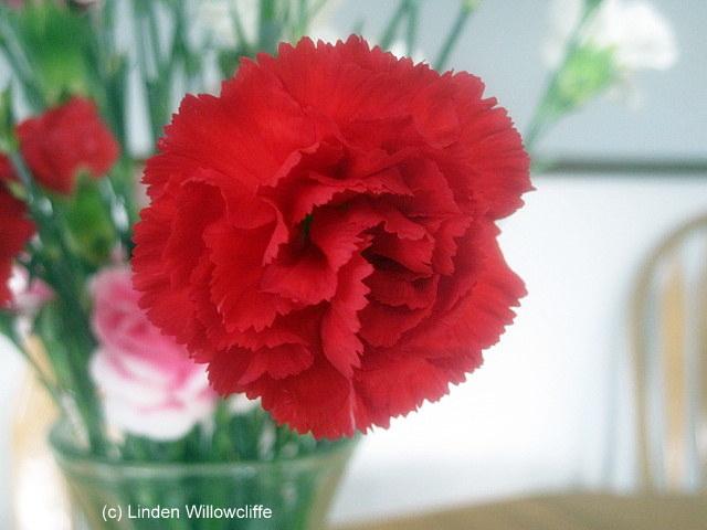 Melancholy Crimson