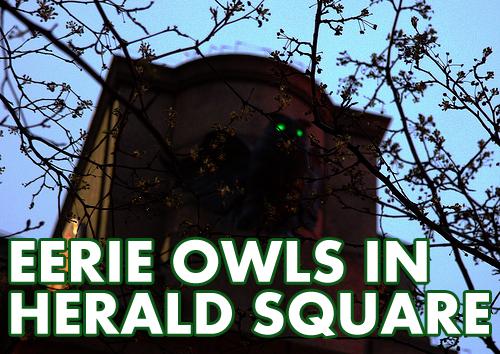 02 owls