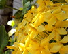 (Guillerm'o) Tags: flower nature yellow garden insect spider flying sony paraguay