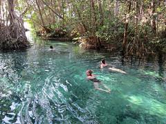 IMG_0505: A Swim in the Mangroves