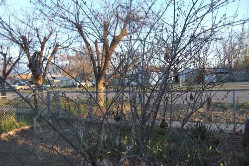 Dawn trees #2