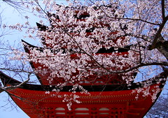 Miyajima Five-Storied Pagoda  Cherry Blossoms[Worldheritage] (h orihashi) Tags: beautiful japan cherry landscape gate shrine pentax hiroshima miyajima harmony 桜 日本 torii worldheritage itsukushima aclass 宮島 k7 世界遺産 blueribbonwinner coth 日本三景 supershot naturesgarden bej abigfave royalgroup platinumphoto impressedbeauty flickraward crystalaward diamondclassphotographer flickrdiamond citrit heartawards theunforgettablepictures diamondstars everydayissunday flickrestrellas cherryontopphotography highqualityimages hatsukaichishi rubyphotographer damniwishidtakenthat thebeautifulimagetop pentaxk7