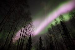 Aurora - 07 Apr 10 (arctic.troy) Tags: alaska outdoors aurora fairbanks northernlights auroraborealis