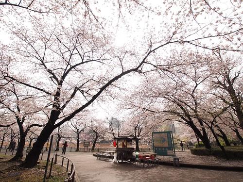 桜並木におでん屋