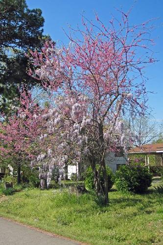 Spring In Mena 17