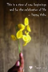 Happy Vishu.... .... (Sarun :)) Tags: india canon south kerala sarun vishukani kanikonna 450d happyvishu discoverplanet harithakeralam