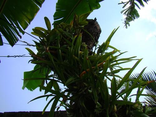 Orquídeas (5)
