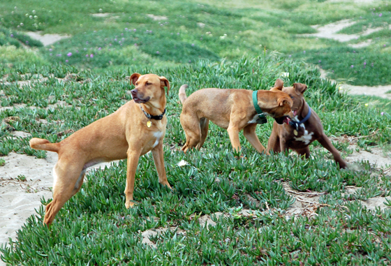 11dogstogether.jpg