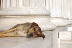 Fa canis (aigialos) Tags: grecia atenas zappeion