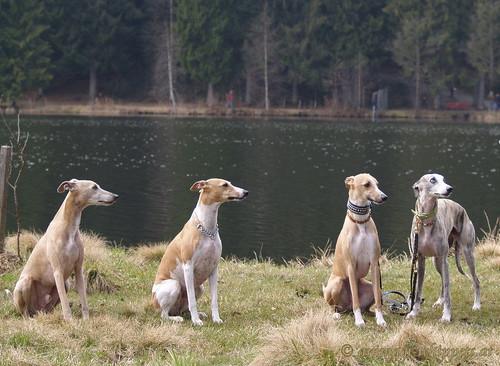 Coco, Nisha, Lennox, Basko