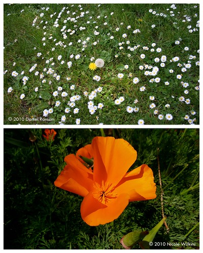 Diptych: Spring