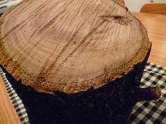 tronco da árvore