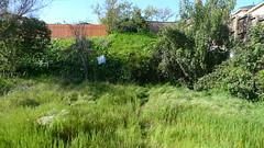 usa losangeles backyard pelican torrance iiiii lx3 pelicansnook