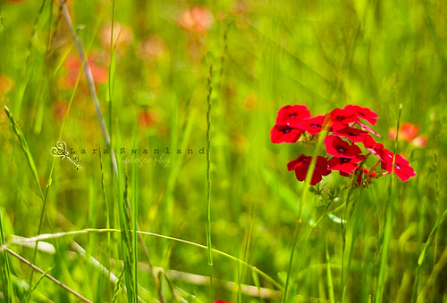 Lara_Swanland_Flowers_in_Brazos
