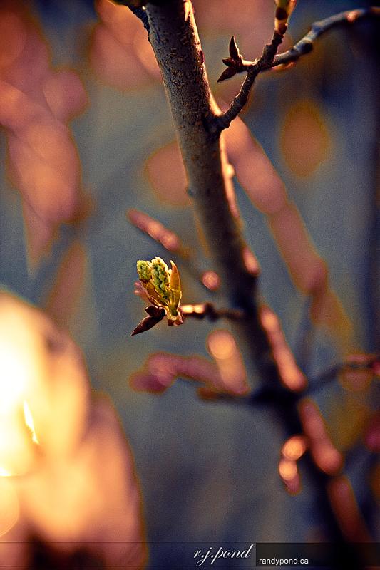 ~ 113/365 Spring Pic ~