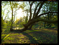 Low Light (Edd Noble) Tags: trees light sunset sun green grass woods nikon dof bokeh f14 85mm nikkor d3 shallowdepthoffield bokerama bokehpanorama