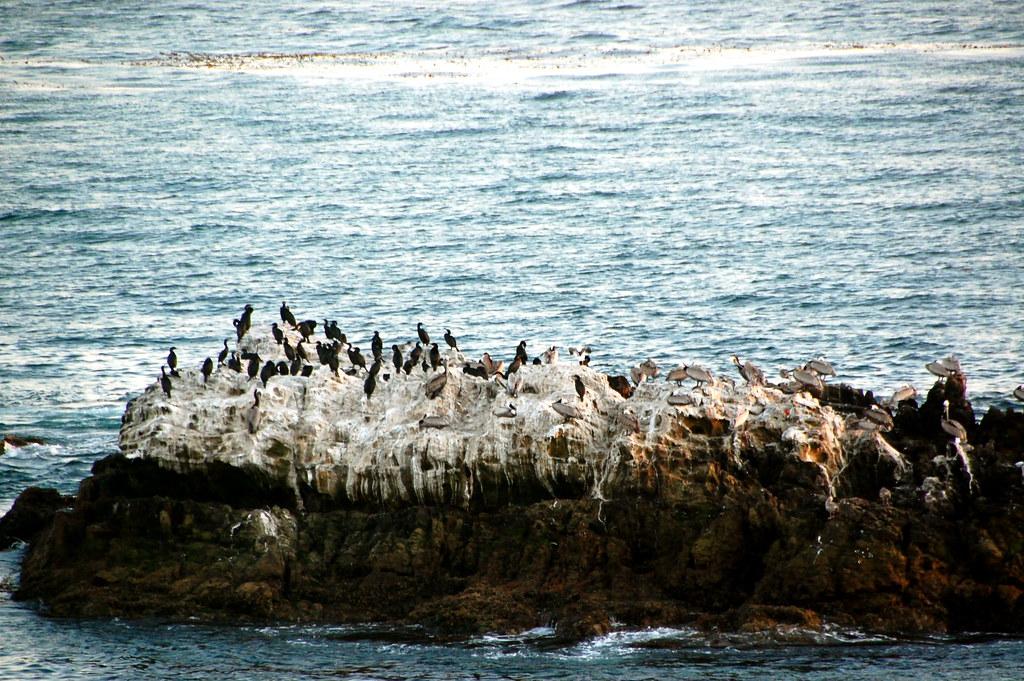 birds and a big rock
