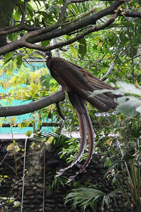 台北木柵動物園0007
