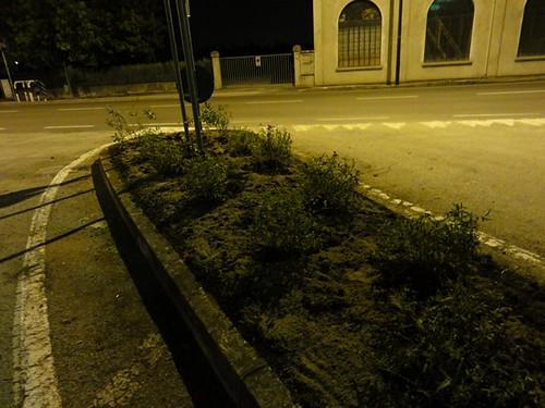 piante di cisto e salvia farinacea a pochi passi dalla rotonda