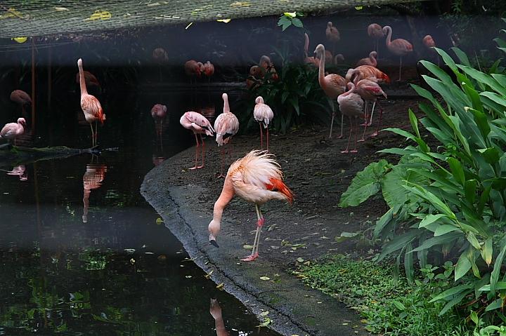 台北木柵動物園0029
