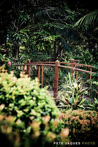 amore gardens. amore gardens