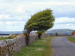 a burren tree (chromehorse) Tags: blue autumn trees ireland sea sun snow france tree green art fall megalithic nature water leaves animals stone architecture clouds forest landscape coast woods clare path tomb theburren bretagne windy eire burren cliffsofmoher neolithic dolmen countyclare coclare poulnabrone strangetrees