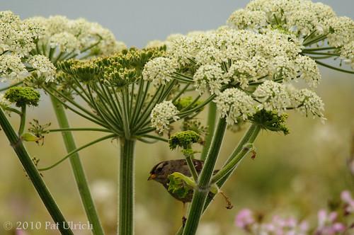 Floral refuge