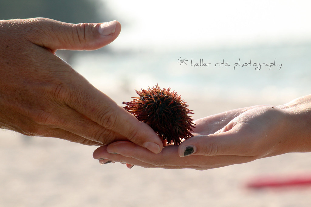 Ocean Treasures_Traveling Sea Urchin