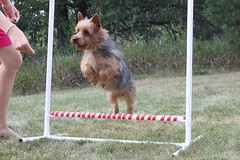 Agility is such fun!