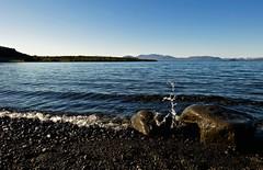 Við Þingvallavatn (Kristinn R.) Tags: lake iceland þingvallavatn absolutelystunningscapes