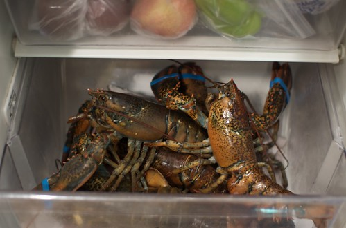 Lobsters in a drawer