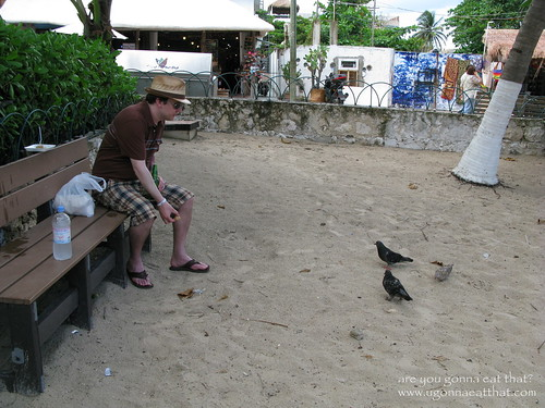 Feeding pigeons in Playa del Carmen