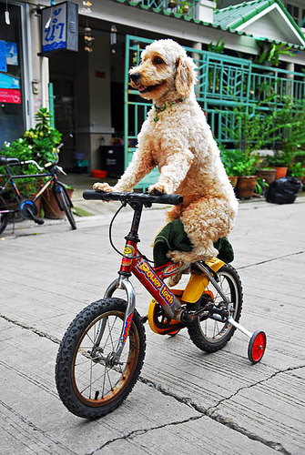 dog-on-bike4