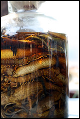 Bug-Snake Whiskey (Lions&Tigers&Ben) Tags: trip travel market adventure laos lao luangphrabang bicycletour