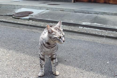 Today's Cat@2010-06-02