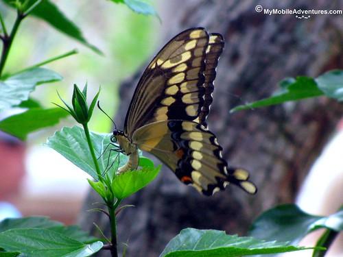 IMG_1470-WDW-DAK-butterfly