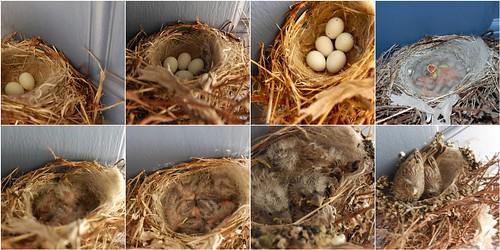 front door finches