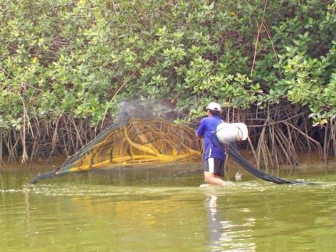 Pescador de los manglares
