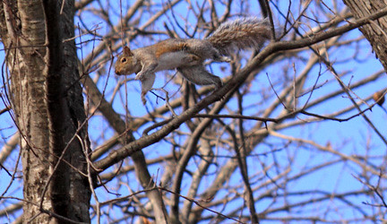 squirrel in flight!