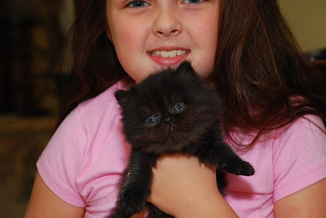 cute black kitten and girl