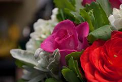 Graduation 2010 (Ben F) Tags: flowers roses soft bokeh ottawa graduation 55mm 1855 nikkor grad carleton nikond60 1855mmf3556gvr