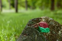 Red & green (Hkan Dahlstrm) Tags: red verde green rot colors rock forest rouge skne rojo groen sweden vert sverige rood rosso f28 2010 rd svalv sdersen ef85mmf18usm canoneos5dmarkii sek klverd