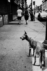 taking a break (brownbeatle) Tags: street light people dog white black brooklyn composition walking dof angle wide streetphotography chain sidewalk explored canonef24mmf28